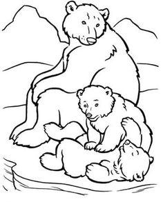 dibujos de osos polares para colorear