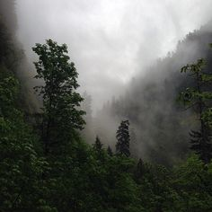 90377: Fog While Hiking By Auxesis On Flickr.