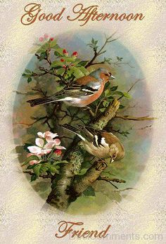 ᐅ Top 68 Good Afternoon images, greetings and pictures for WhatsApp Bird Pictures, Pictures To Paint, Evening Greetings, Cartoon Birds, Good Afternoon, Afternoon Quotes, Afternoon Messages, Bird Drawings, Vintage Birds