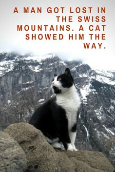 Incredible stories about cats: a man got lost in the Swiss mountains of Gimmelwald. A cat showed him the way. Click here for story and pictures: http://www.traveling-cats.com/2016/08/cat-from-gimmelwald-switzerland.html (incredible stories about cats, Gimmelwald, Switzerland, Swiss mountains, incredible stories)
