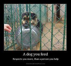 a dog you feed