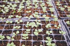 how to #germinate #s