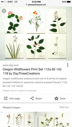 Pressed Leaves, Leaf Art, Botanical Prints, Wild Flowers, Stones, Artwork, Plants, Image, Rocks