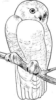 Free Snowy Owl Coloring Page More