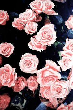 gorgeous roses! #pink #roses