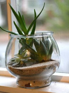 Learn how to make these adorable miniature greenspaces!