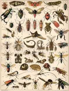 Insects 1897 Antique Print Lithograph Insects Print by Craftissimo