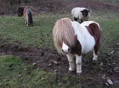 Screw getting another dog, I want a Shetland pony