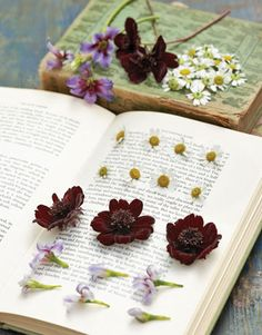 Flowers and books--a great combination! I want to make a flower press one of these days.