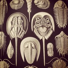 Ernst haeckel more. Science Illustration, Art Deco Illustration, Natural Form Art, Ernst Haeckel, Iphone 8, Nature Drawing, Prehistoric Animals, Patterns In Nature, Background Patterns