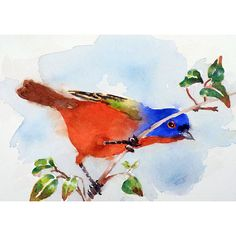 """""""Rainbow in the Sky"""" Painted Bunting 8 x 10 in. Watercolor Painting Print ... $21.00 by LaBerge-Muren"""