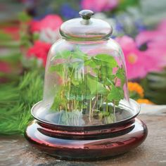 World-renowned garden author Tovah Martin features H. Potter terrariums and cloches throughout her book.