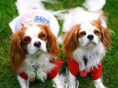 Happy Fourth: 10 Cute Patriotic Puppies