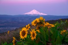 Springtime In the Hills ( Columbia Hills and Columbia River Gorge--Mt Hood. WA)