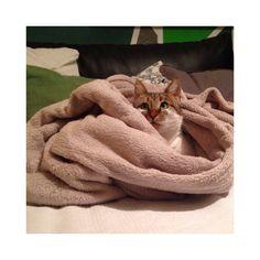Eva , eingekuschelt in unserer Decke :)