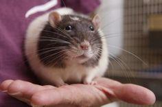 La Collina dei conigli aiuta anche i topolini