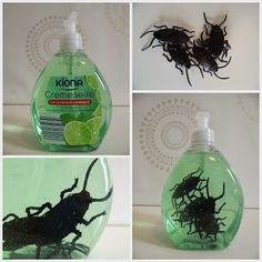 DIY Halloween Decoration with Cockroaches - So bringt ihr eure Gäste auf der Halloweenparty zum Kreischen - Kakerlaken Deko.