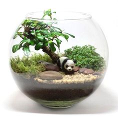 Have indoor plants in your house? If now you want to have the green elements in your house, here we offer some of nicest indoor plant designs that might help you to make you living space fresher, breathable, and chic. Terrarium Scene, Air Plant Terrarium, Garden Terrarium, Fairy Garden Pots, Indoor Fairy Gardens, Glass Garden, Succulents In Glass, Succulents Garden, Miniature Plants
