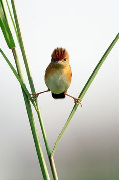 Angry <b>birds</b> <b>funny</b> <b>pictures</b> | Popular <b>funny</b> <b>pictures</b>