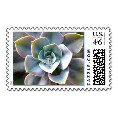 Shop Colorful Succulent Stamp created by CarolsCamera. Invitation Envelopes, Invitations, Colorful Succulents, Stamp Making, Make All, Simon Says Stamp, Postage Stamps, Best Gifts, Wedding Inspiration