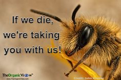 If we die, we're taking you with us! #bees #neonicotinoids #pesticides
