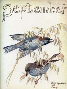 House sparrows feeding - Morning Earth Artist/Naturalist Edith Holden