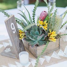Pint-size planter: The rustic wood table marker and matching box set the stage for a gorgeous combination of succulents and proteas alongside the yellow kangaroo paw (Anigozanthos) and pearl banksia.