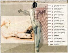 Along the spine, each of our vertebrae is linked to a particular emotion. Here's the analogy mapping.