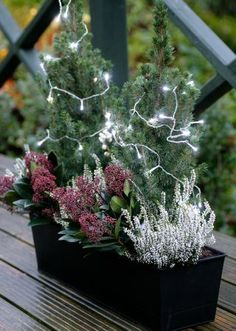 Another lovely festive gift for the home available at the Balcony Gardener: this windowbox features two small Christmas trees and an array of winter berries to liven up a patio, balcony or windowsill. Christmas Window Boxes, Winter Window Boxes, Small Christmas Trees, Christmas Decorations, Balcony Window, Balcony Plants, Patio Plants, Window Sill, Winter Plants