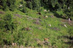 Záhrada divokej prírody na Poľaně 🙂 Medveď začal vystrašovať, ale nakoniec aj ostal. Wildlife Photography, Animals, Animales, Animaux, Animal, Animais, Nature Photography