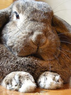 paws fluffy big - Google Search