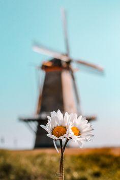 World Travel Decor, Travel Wall Decor, Travel Themes, Netherlands Facts, Netherlands Windmills, Rotterdam, Utrecht, Travel Gallery Wall, Dutch People