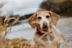 How Dogs Find Their Way Home (Without a GPS)   DeepStuff.org