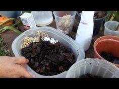 Curso de orquídeas on-line: Sustratos - YouTube