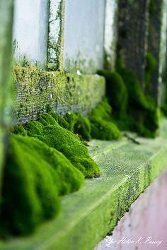 Undisturbed by Helen K. Passeymoss on window sill Flora, Moss Garden, Window Sill, Window Ledge, Wabi Sabi, Botany, Shades Of Green, Mother Nature, Planting Flowers
