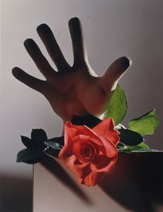 """""""Rose with Cast of Michelangelo Hand"""" © Horst P. Horst / Staley-Wise Gallery New York"""