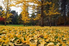 Finch Arboretum is 65 acres and gorgeous to walk through in the fall.