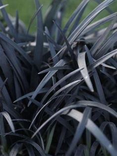 Include vertical interest in your plantings with tall ornamental grasses.