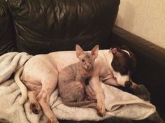 """That dog's saying """"Don't judge me!""""   Woman Adopts One-Eyed Cat and Her Dog's Reaction is Surprising 