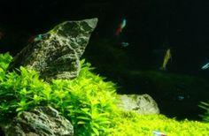 The Three Essential Components of the Planted Aquarium