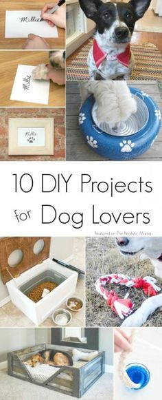 10 of the Best DIY Projects for Dog Lovers