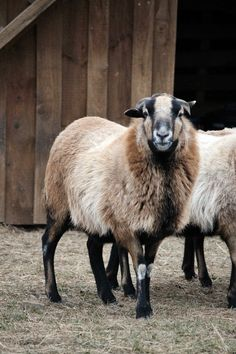 FARMHOUSE – ANIMALS – spring is a time for renewal and rebirth on the farm.