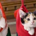 Kitten in sock
