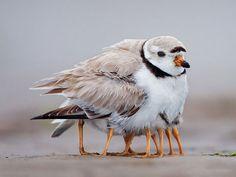 Aussi touchants qu'attentionnés, ces oiseaux prennent tendrement soin de leurs petits | Daily Geek Show