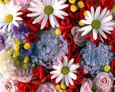 Widescreen flower