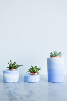 three blue concrete planters with succulents on marble surface
