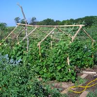 Eagle Heights Community Gardens - Madison guide
