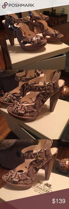 Stunning Coach Shoes Genuine Coach. Comes with box and original packaging.  Gotta have shoes. Almost new. Coach Shoes Heels