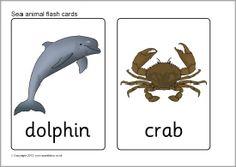 Sea animal FLASH CARDS (SB7725) http://www.sparklebox.co.uk/previews/7701-7725/sb7725-sea-animal-flash-cards.html#.VbNmnKRVhBc
