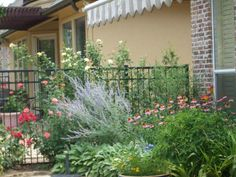 English gardening - North Texas Style Butterfly haven!